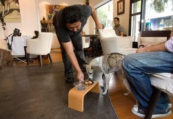 Bow Bow Deli cafetería para perros
