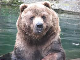 Zoo Animals - Bear