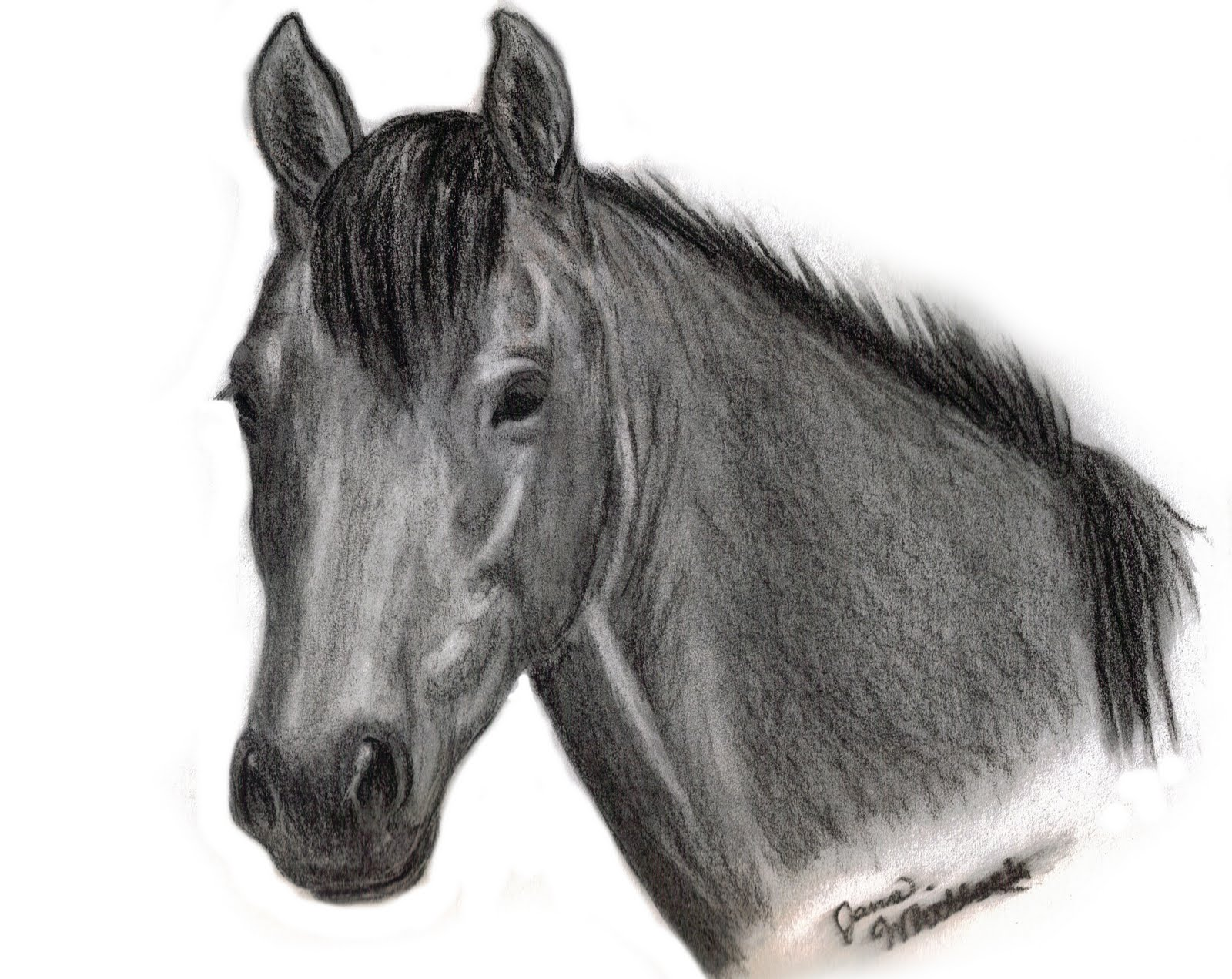 Horse drawings by jana whitlock