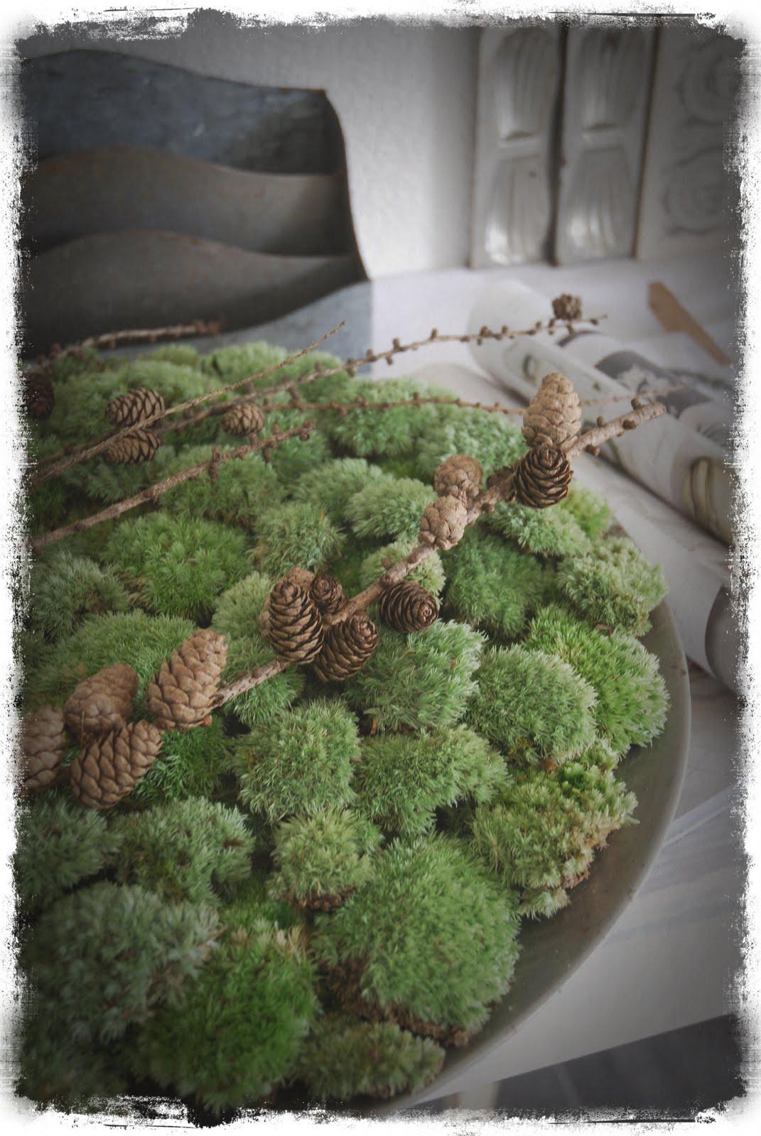Weisses Herz Waldfunde