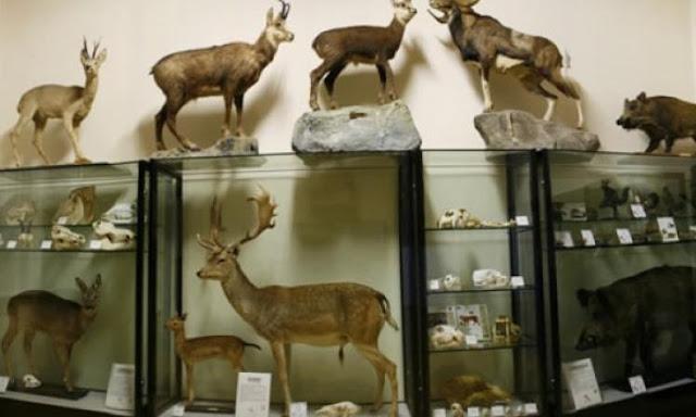 السياحة في بلدة جيسولو الجميلة museo-civico-jesolo.