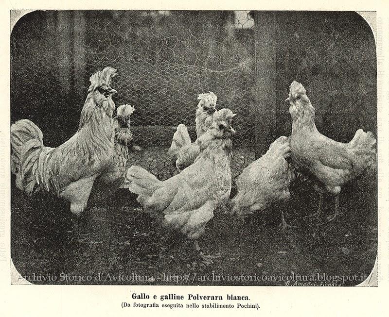 Polverara bianche (fine XIX secolo)