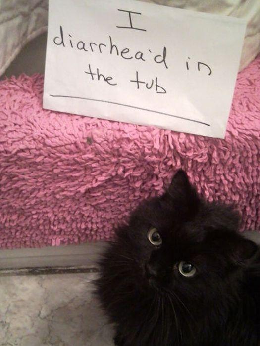 Cat Shaming Funny