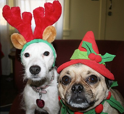 Cutest Dog Christmas Photos