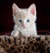 image of cute kitten