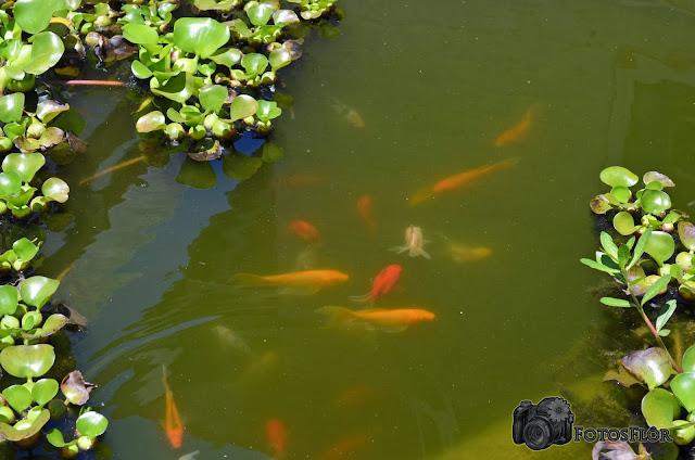 Descubra como colaborar com o meio-ambiente, contatoarcadenoe@gmail.com