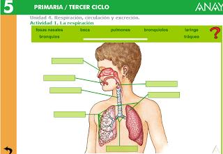 http://www.ceipjuanherreraalcausa.es/Recursosdidacticos/QUINTO/datos/02_Cmedio/datos/05rdi/ud04/01.htm