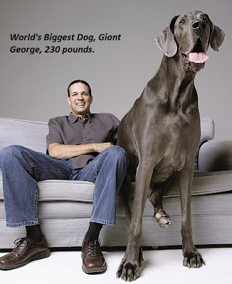 World's Biggest Dog, Giant George