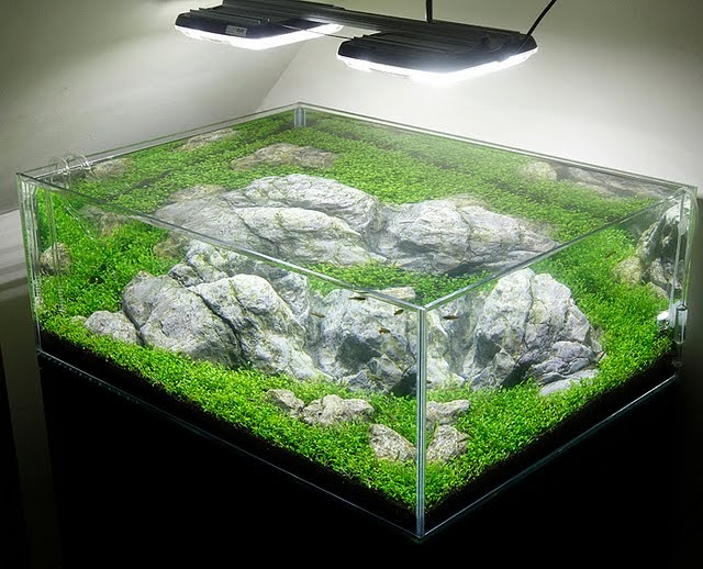 Acrylic or glass aquarium aquascape aquarium for Acrylic vs glass fish tank