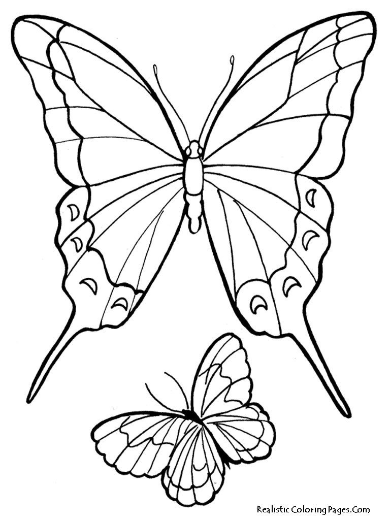 realistic butterflies coloring pages - photo#5