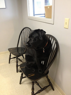 lebanon, nh., Norwich, VT., Hanover, NH. your hometown veterinarian