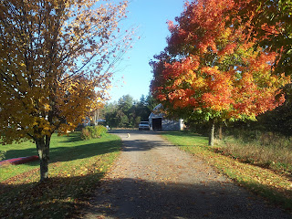 The driveway with trees in autumn colors
