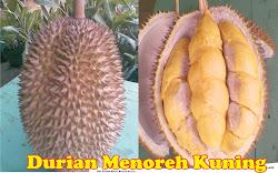foto: Durian Menoreh Kuning