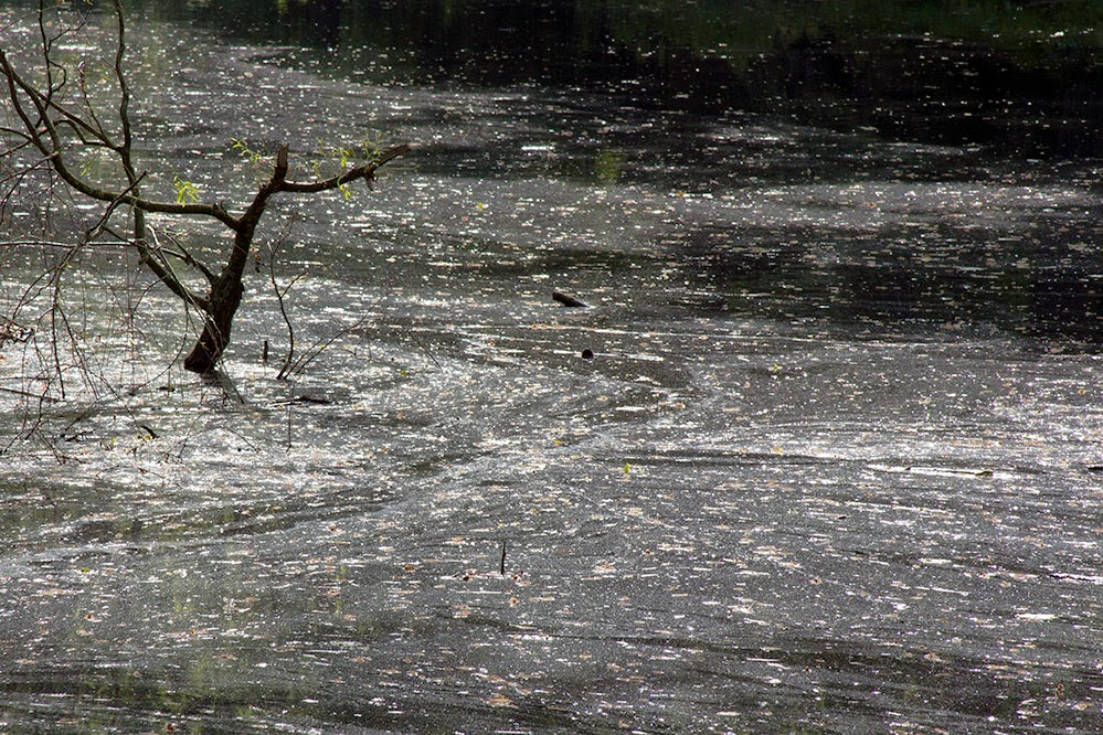 branch in dirty water