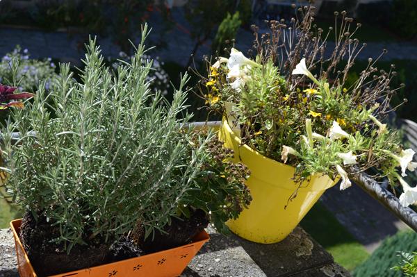 herbal and flower garden