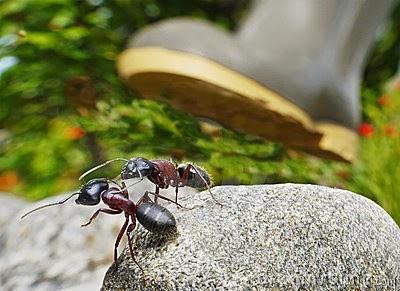 http://3.bp.blogspot.com/-0z4d0jrTVS0/VPtw6qZn2NI/AAAAAAAAMO0/s4TtsqFhc1A/s1600/ants-survival-under-boot-11327945.jpg
