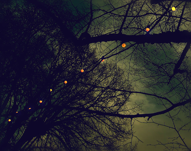 Tree Lights - Photograph by Tim Irving