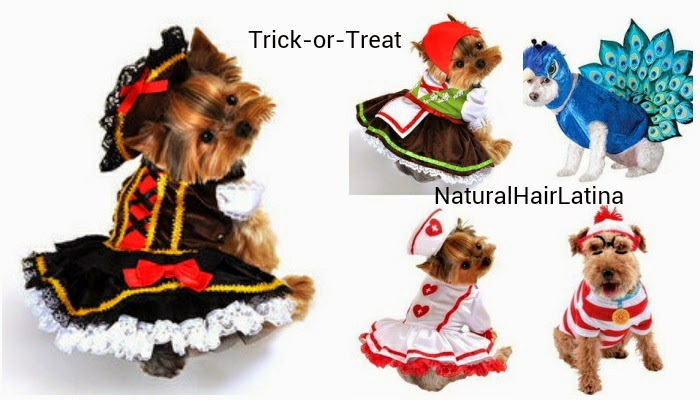 Halloween for pets, brown bee dog costume, peacockmdog costume, alpine girl dog costume, swashbuckler pirate girl dog costume, Cutie Nurse Dog Costume , Elope Costumes Where's Waldo Woof Pet Costume, Small, dog Halloween, top halloween costumes for dogs, adorable dog costume, cute dog costume, greatest pet costumes ever, greatest dog costumes ever, dogs in halloween costumes, dogs gone trick or treating, pretty puppy, pretty pooch