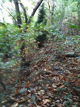 paseo por los bosques de eleizondo
