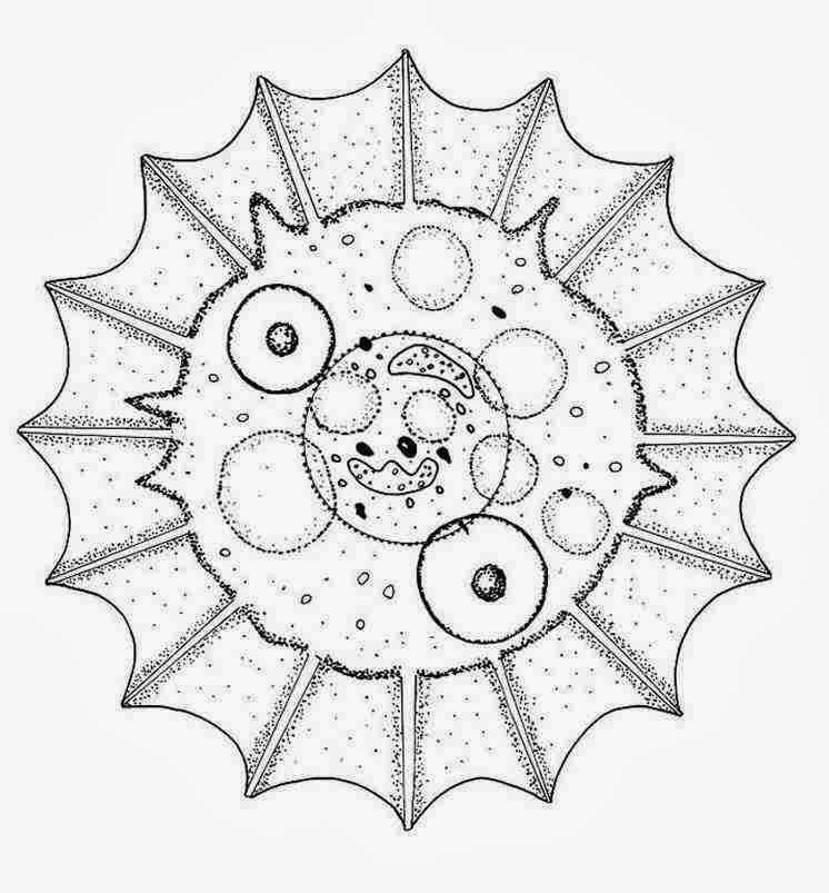 Download Animal Shell Mandala Coloring Pages Special For You