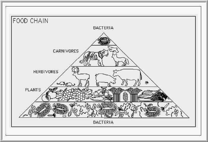 Pyramid Worksheet In Addition Ecosystem Organization Pyramid Worksheet ...