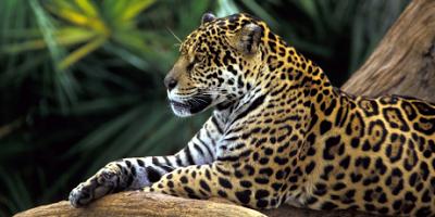 Confronto do Petróleo na Amazônia
