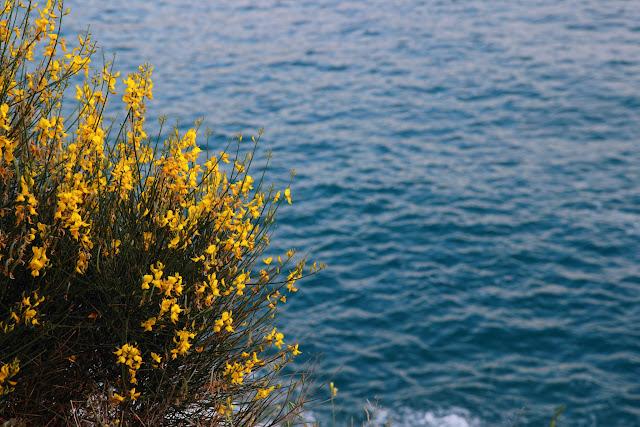 Mare di Bonassola, Cinque Terre