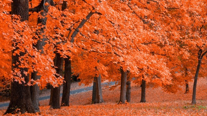 best fall autumn wallpaper forest orange leaves