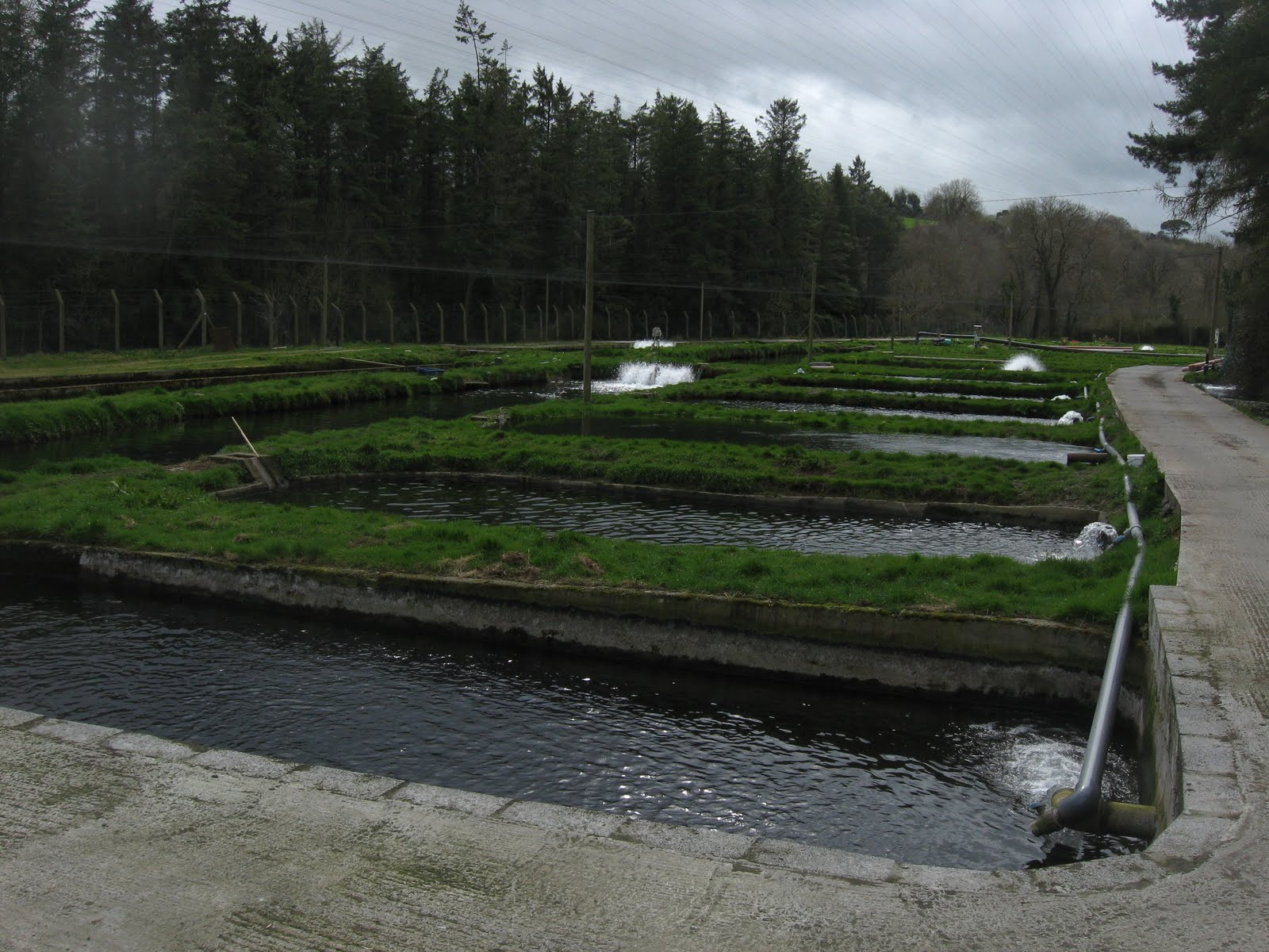 Sustainable fish farming fish farm tour of ireland april for Fish farms in california
