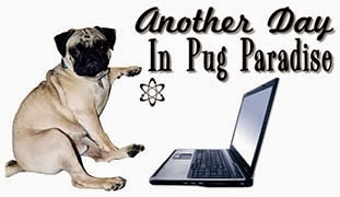 Another Day in Pug Paradise Web Design and Consulting