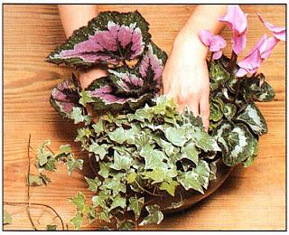 Уплотните почву вокруг растений, добавив ее при необходимости
