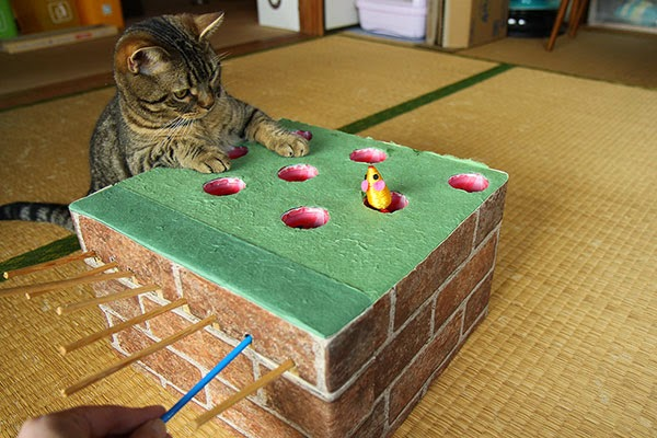 Handmade Whack-a-Mole Game For Your Cat