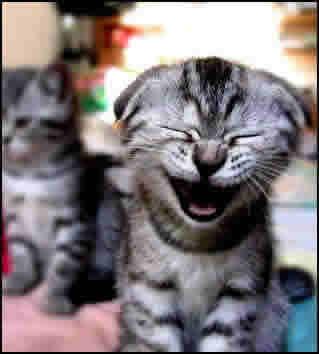 Den skrattande katten