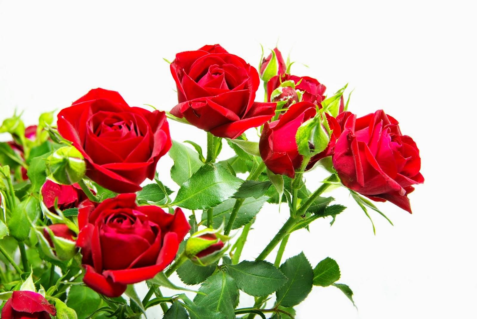 Flores Rojas, parte 3