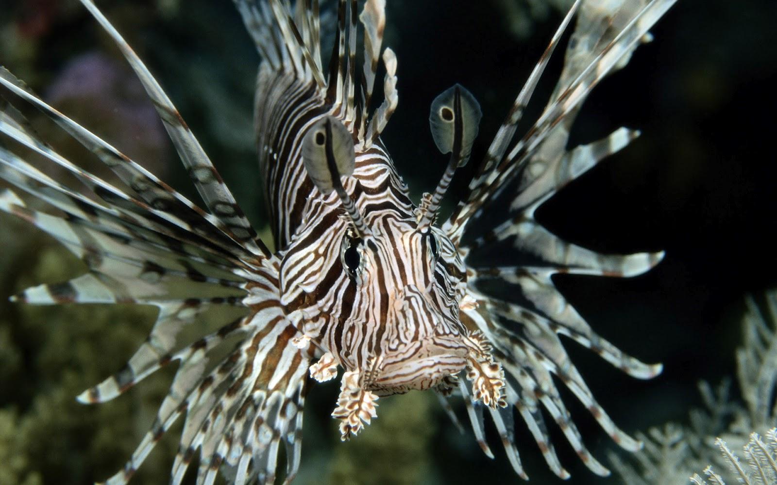Tropische vis in de kleuren zwart wit onderwater foto met
