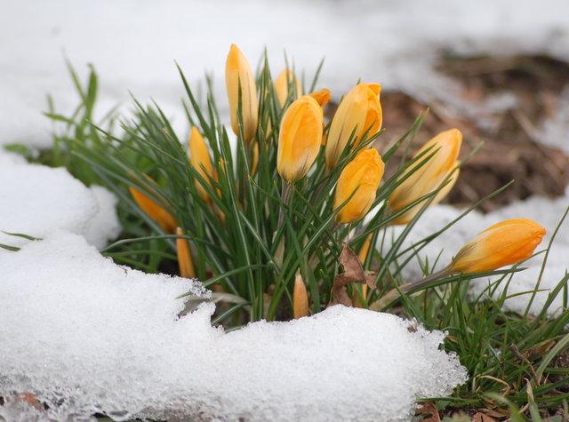С первым днем весны вас дорогие мои