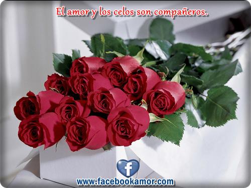flores de rosas rojas hermosas