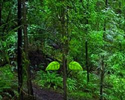 Juegos de Escape Kisatchie Forest Escape