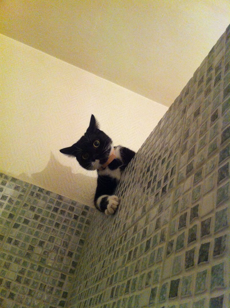 cat peeking on bathroom, funny cats, cat photos, cat pictures