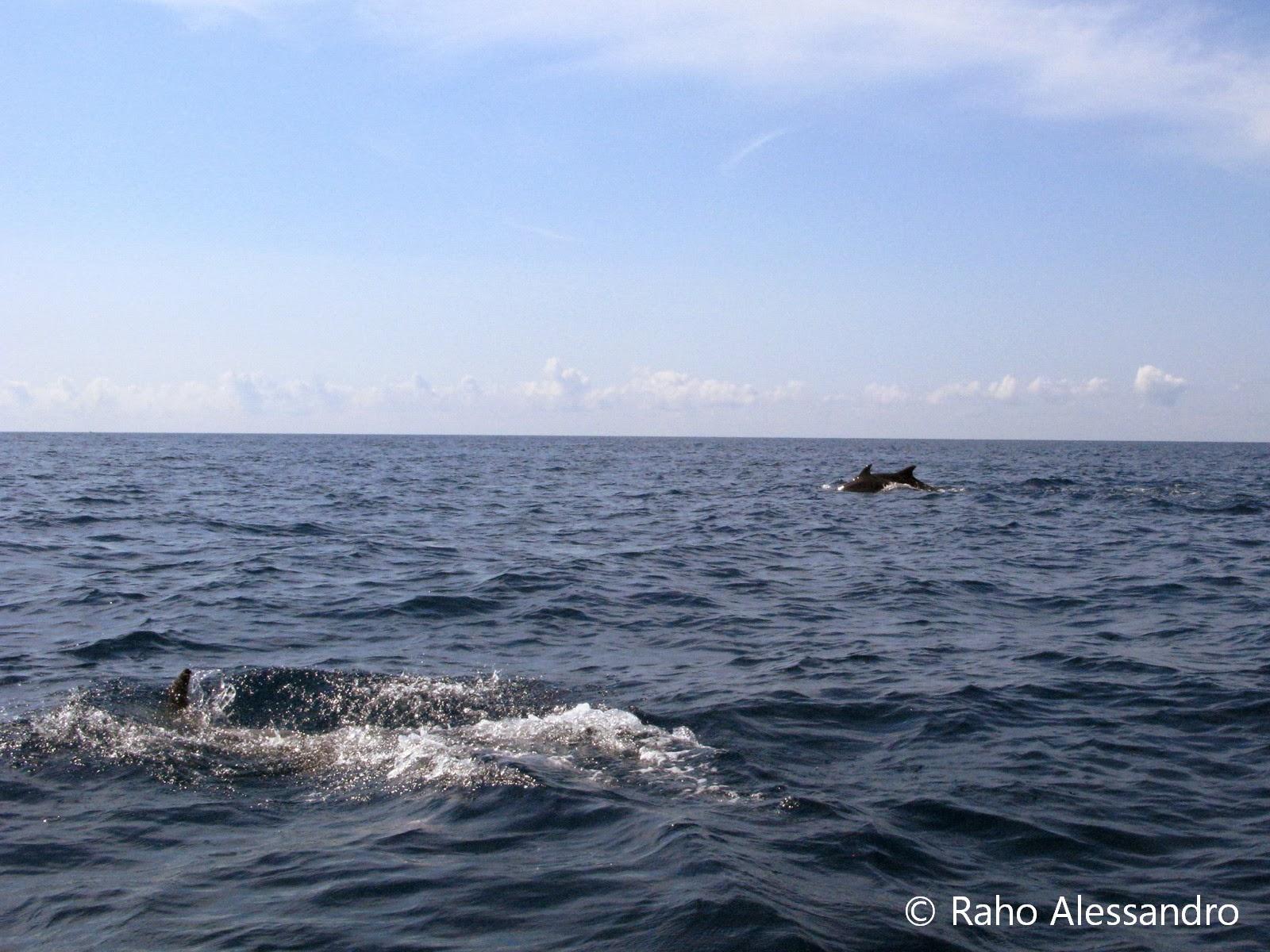 Necton e plancton mammiferi marini tursiope for Mammiferi che vivono in acqua