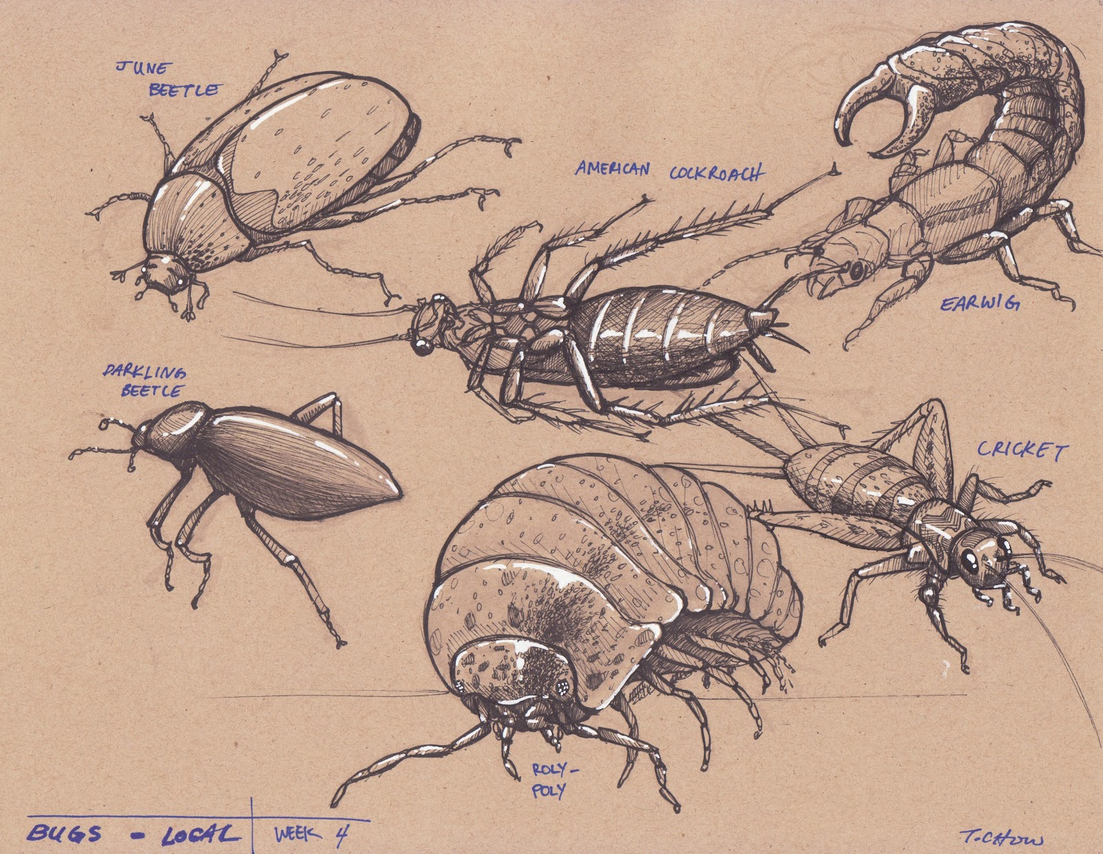 tyler chow dynamic sketching week 4 insects
