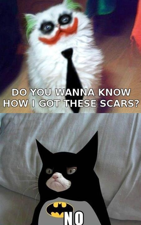 no-batman-joker-cat.jpg