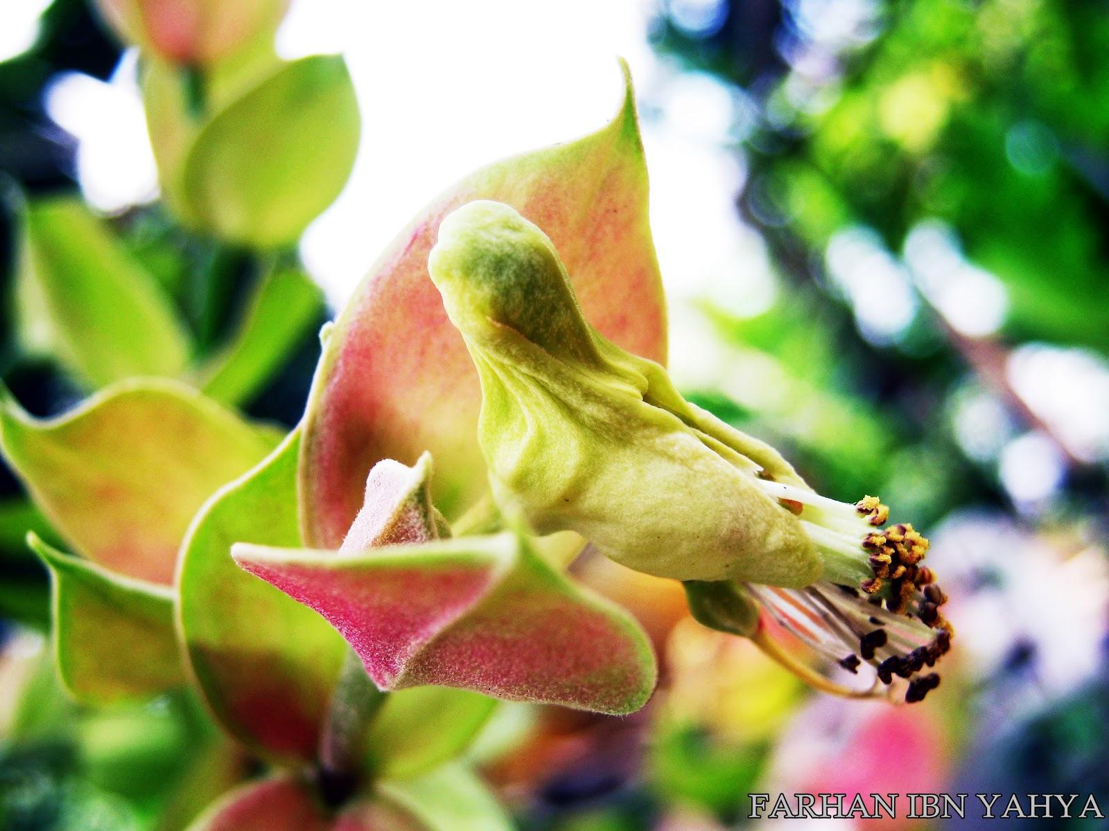 bunga burung? :