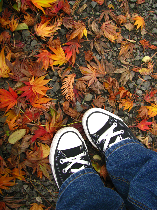 Fall Leaves and Converse by April Sprinkles