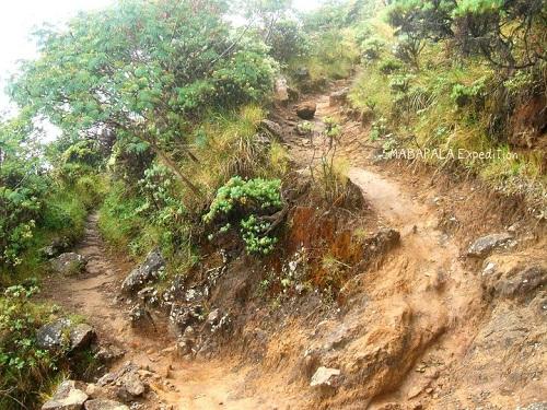jalur pendakian gunung lawu cemoro kandang, peta