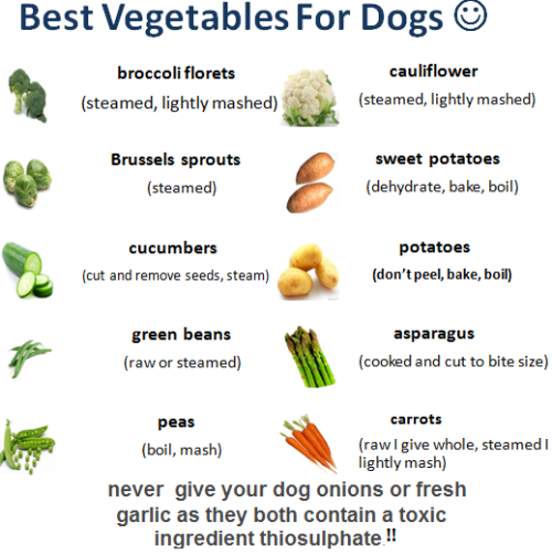A List Of Vegetables Dogs Can Eat