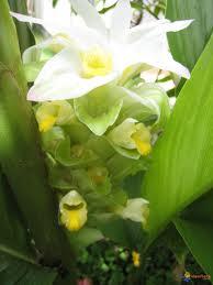 Fleurs de Style, conseils en orchidées, fleurs, plantes, Astuces ...