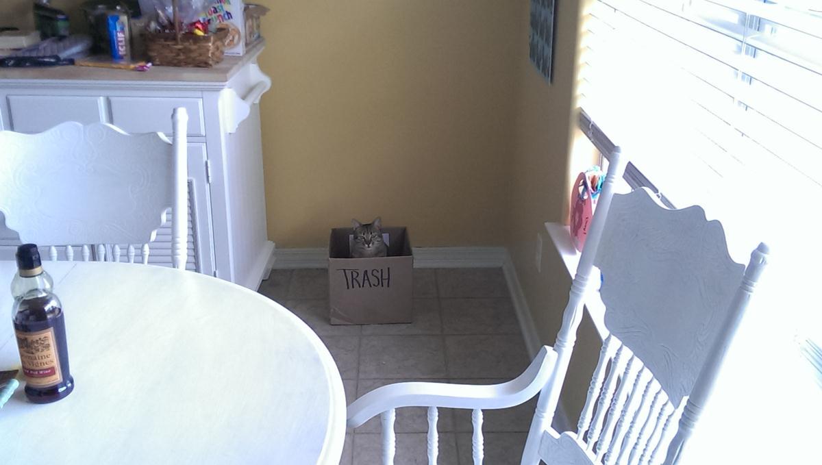 Любимое место кота в доме