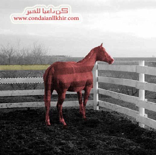خلفية خيول