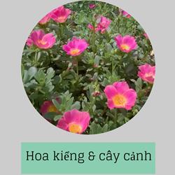 https://sites.google.com/site/hinhanhtqcc/hoa-kieng---cay-canh